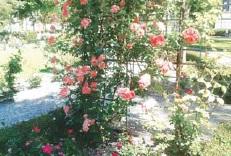 Jardines en nuestra casa de campo