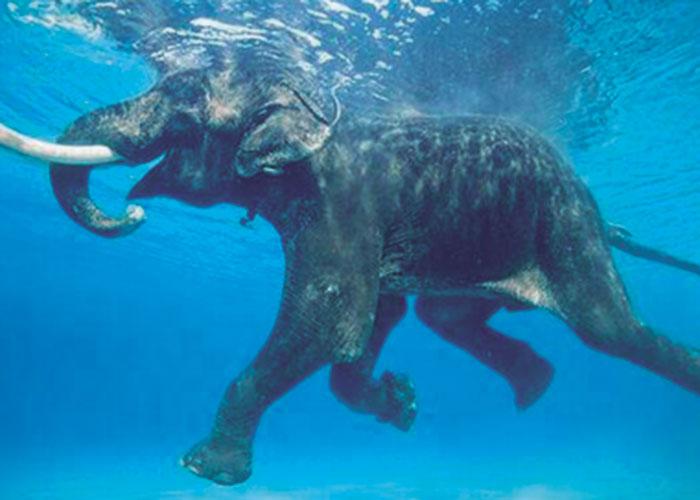 Cosas de elefantes