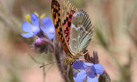 Una guía con las 20 especies de mariposas más comunes en el Parque Alces, iniciativa del ayuntamiento de Alcázar para el Día Internacional de la Biodiversidad
